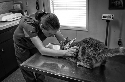 At the Vet's 2 | by Anne Worner