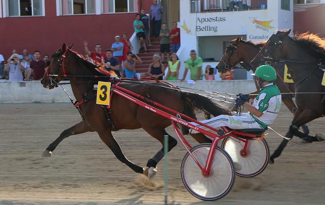 Trotting Race