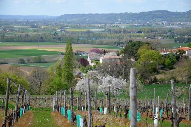 Le vieux bourg dans la campagne du Brulhois (Montesquieu, Lot-et-Garonne)