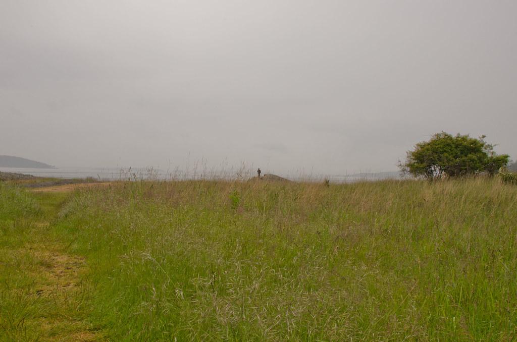 Thru the Grass at Brooks Point