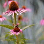 Bee bi flowers (2X)