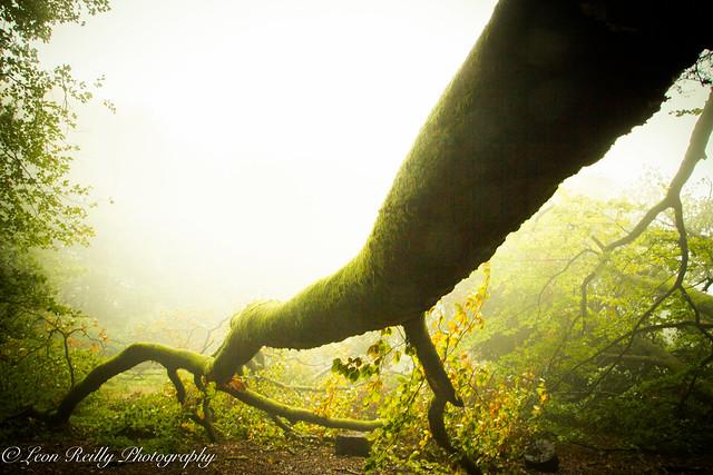 Misty Morning Hop-15