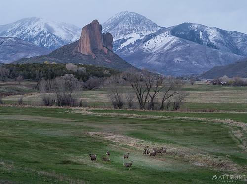 colorado crawford needlerock clouds deer field mountains storm