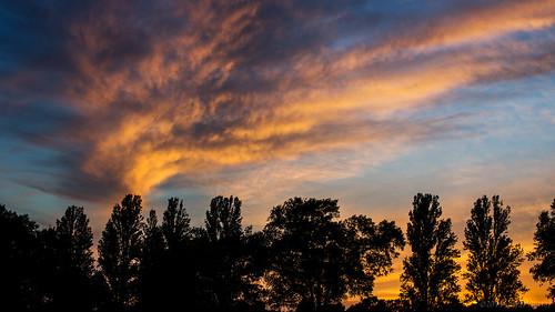 uk blue trees sunset orange clouds widescreen silhouettes surrey oru 169 2014 hersham