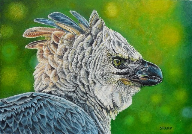 Acrylic and Colored Pencil, For Sale: Harpy Eagle