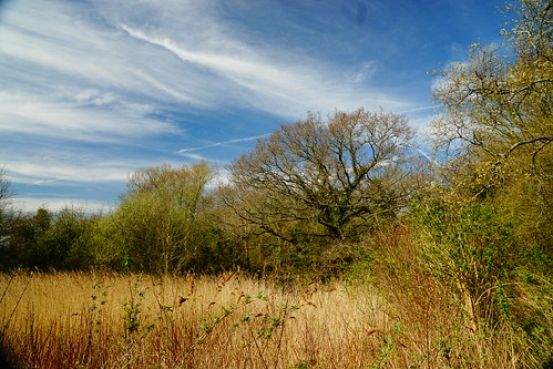 congresbury northsomerset strawberryline england sony a6000 color trees rhyne rhine reen grass sky landscape outdoors clouds uk nature britain