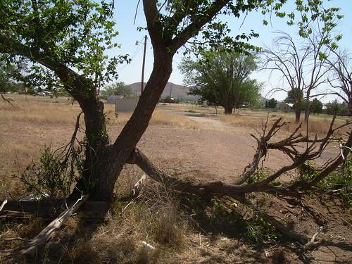 Fallen Tree Branch | Vicky Ellis | Flickr