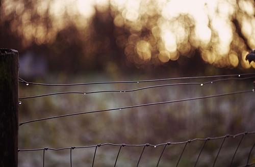 park fence landscape golden droplets wire focus dof bokeh hour farnham