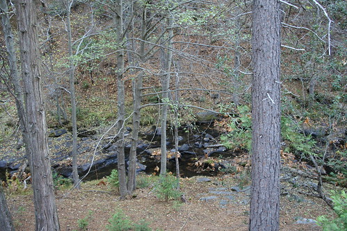 california travel autumn trees nature water creek landscape rocks hiking sierra nationalforest
