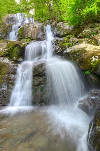 pink virginia waterfall nationalpark shenandoah wildflower darkhollowfalls