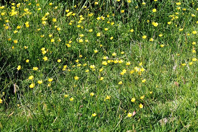 Kerry Flowers