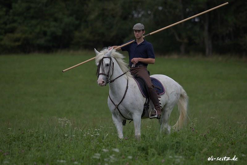 Camargue Horse - Horse Scanner