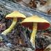 Mushrooms & Fungi 2014