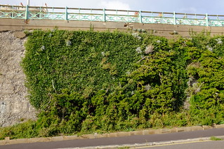 Madeira Drive Green wall restoration works