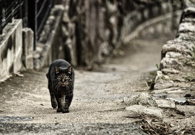 LONE CAT 一匹猫