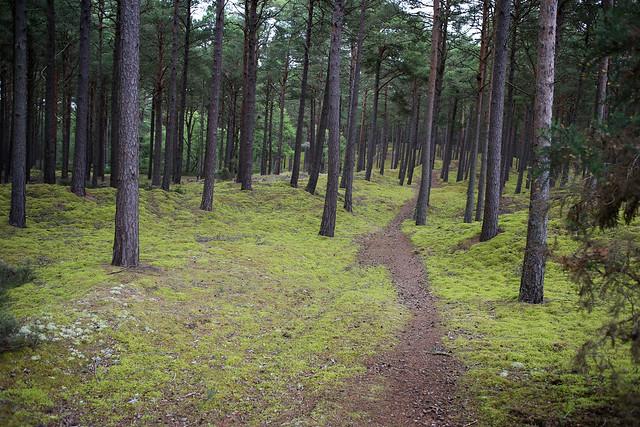 Culbin Forest