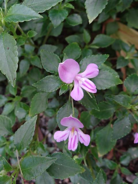 Botanischer-Garten-00769