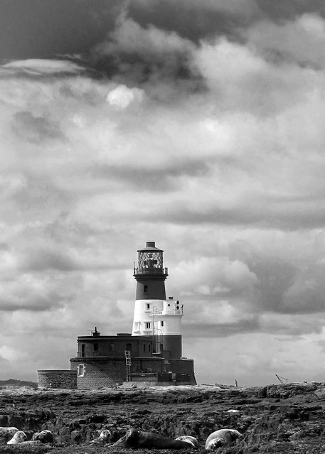 Northumberland, The Farne Islands (14)
