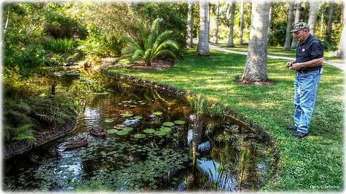 donandtheducks donmiske mckeebotanicalgardens mckeejunglegardens verobeachflorida ducks pond garden reflections royalpalms water scenic landscape