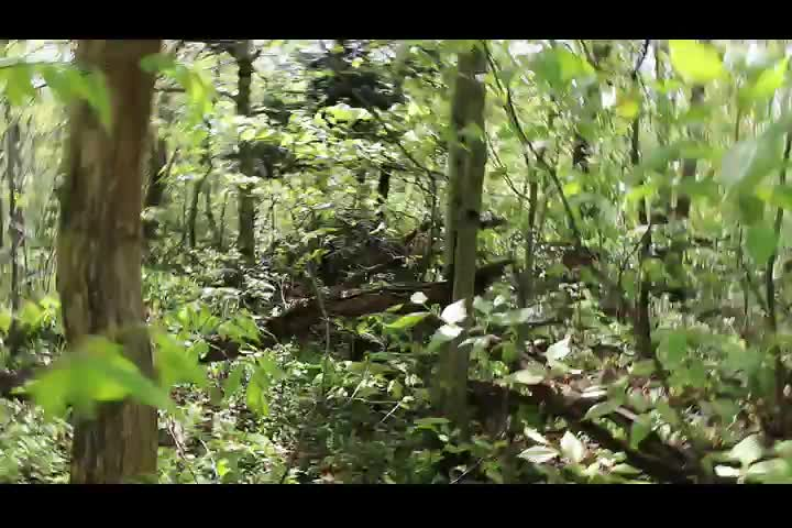 169 Video of Catskill Bushwhacking between Big Indian and Fir Mountain