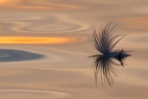 lake reflection water feather floating explore sunsetbeach float richmondhill explored lakewilcox