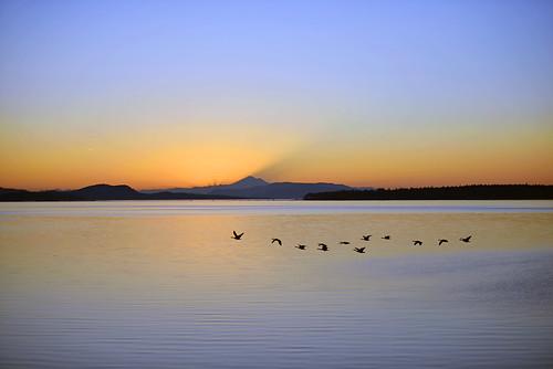 flickexplore explore sidneysidneybcsidneybytheseasidneybritishcolumbiabritishcolumbiabccanadavancouverislandnikond800nikond800nikkor70200mmnikon70200mmislandislandswaterwetseawaveswavetidetidalcoastcoastlinecoastalreflectio clear sunrise ilobsterit