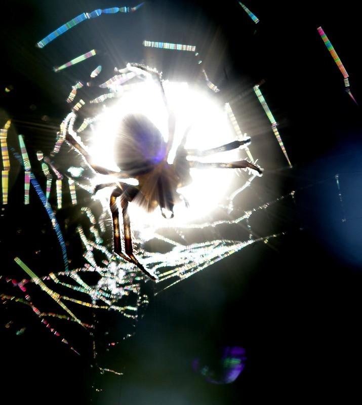 ~Light Weaver~