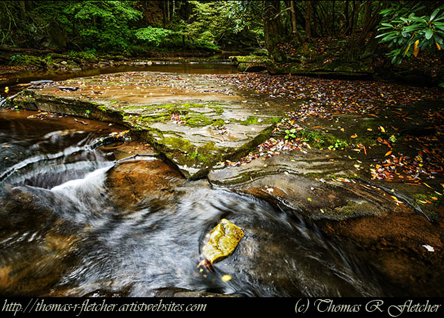 Williams River Headwaters