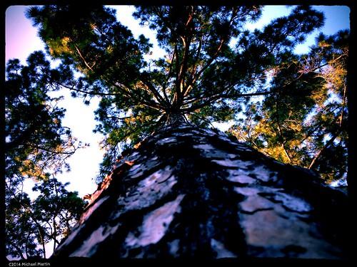 sunset pine squirrel texas houston cypress iphone4s