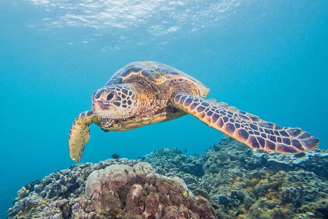 turtle2July17-14