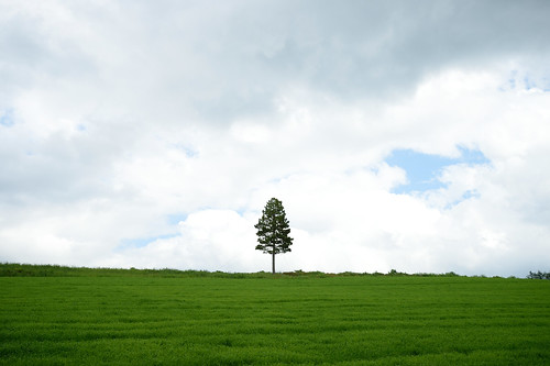 tree nikon df hokkaido observatory jp 北海道 日本 furano singletree 富良野 麓郷 富良野市 一本の木 rokugou 麓郷展望台 一本木 afsnikkor2485mmf3545gedvr rokugouobservatory