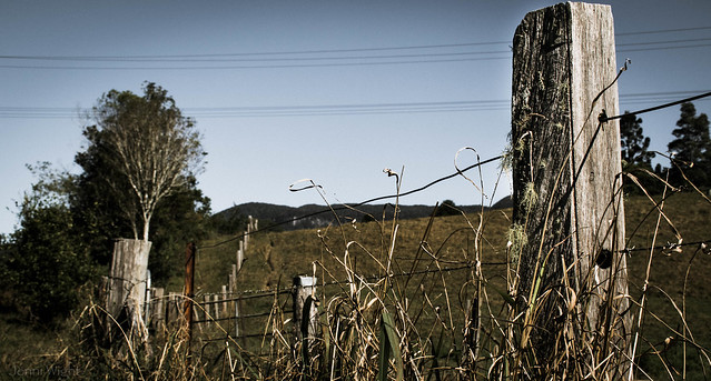 Wires & Posts HFF