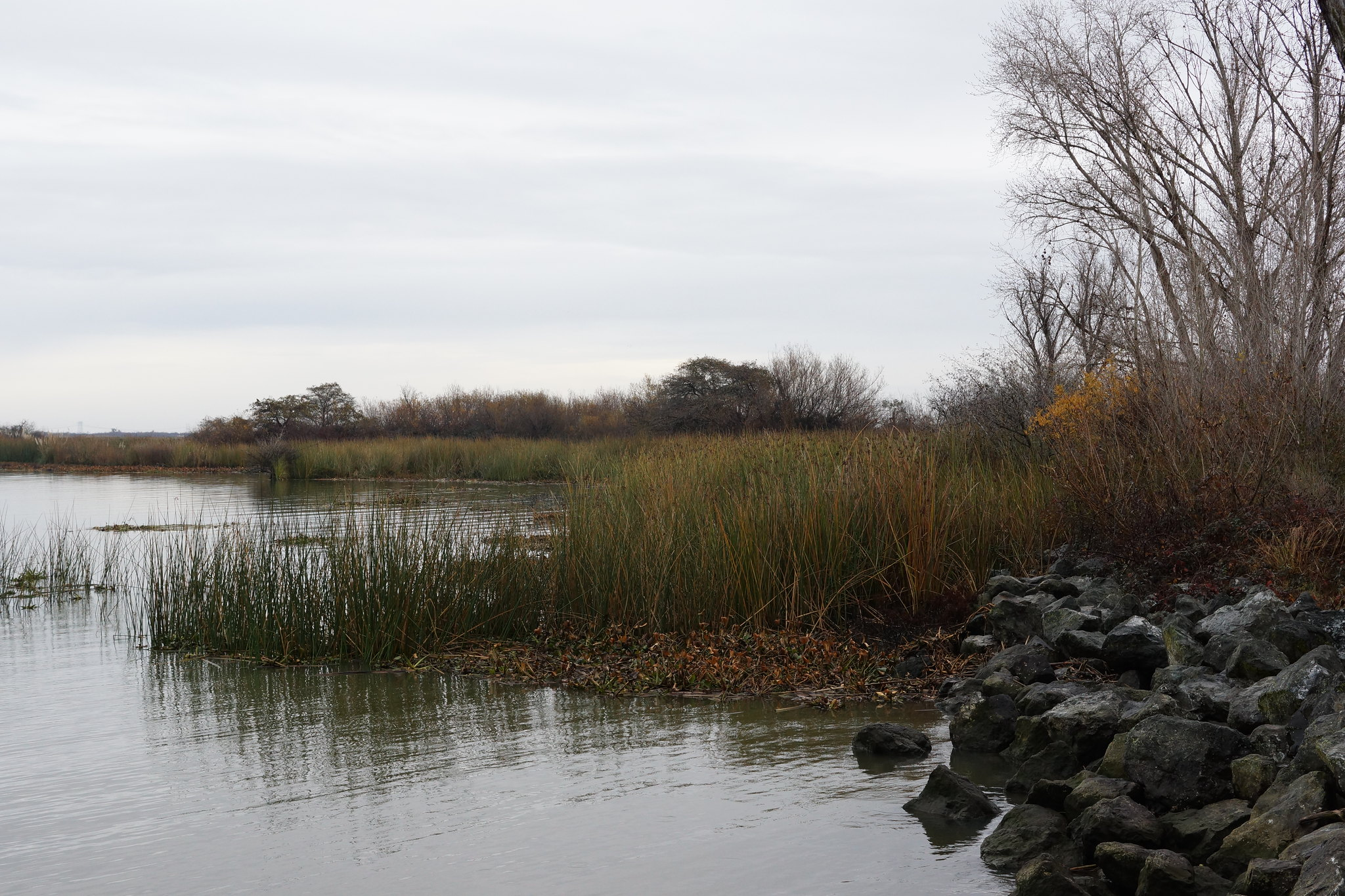 2017-01-03 Big Break Shoreline's Watershed (#3)