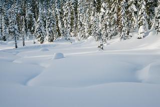 Alpine Meadow   by Bryn Tassell