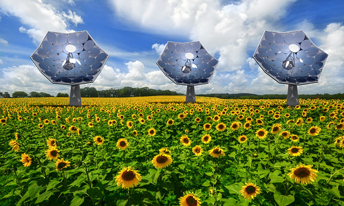 Sunflower_1 | by IBM Research
