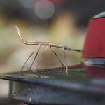 Sa, 13.06.15 - 07:04 - Parque Nacional Cotopaxi