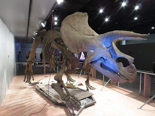 Triceratops, Temporary Dinosaur Exhibit, National Museum of Natural History, Washington, D.C. | by Ken Lund