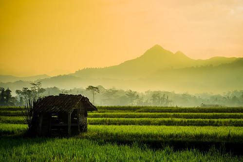 morning misty sunrise layer goldenhour