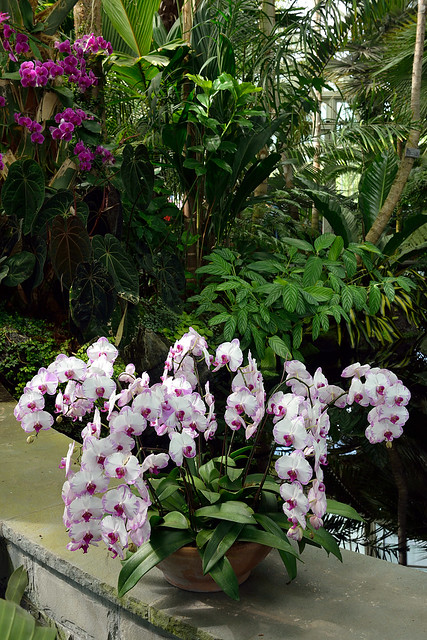 Leftover Orchids