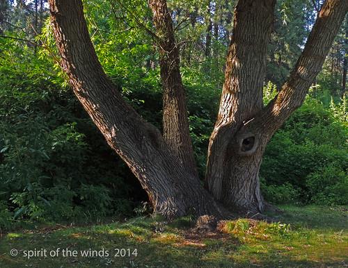 trees otw arboretums fincharboretum spokanewashingtonstate