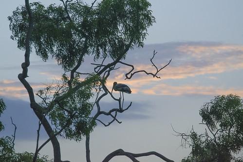 sunset nikon lalbag barandur flickrandroidapp:filter=none