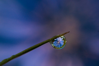 Dewdrop Refraction | by Anthony Fountain