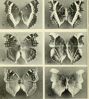 "Image from page 173 of ""The Entomologist's record and journal of variation"" (1890) 