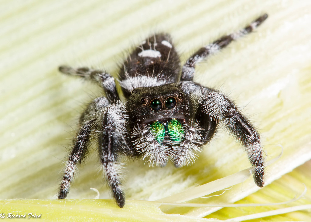 Most state spiders harmless to people