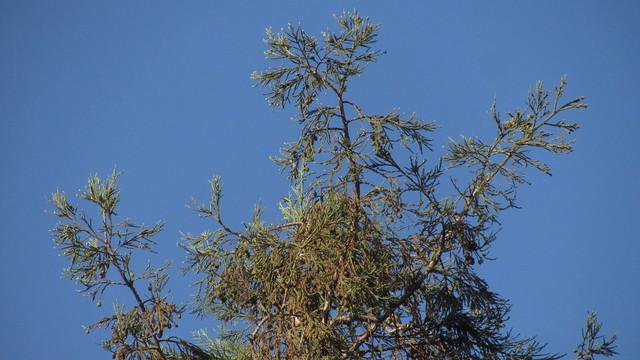 IMG_4869 redwood small bird