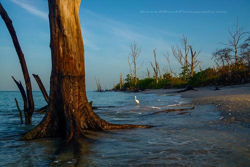 beach sunrise key florida englewood gulfcoast shorebird englewoodbeach manasota stumppassstatepark englewoodflorida lovefl russburch rburchphotography