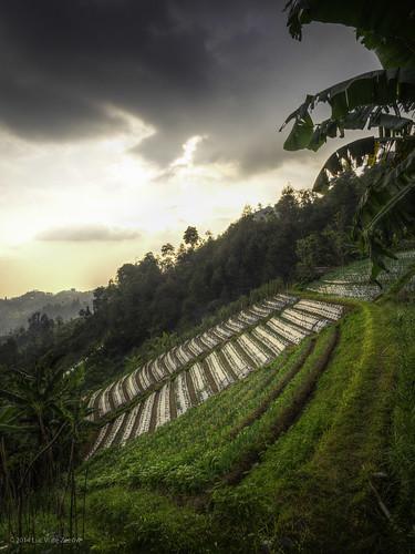 indonesia centraljava karanganyar