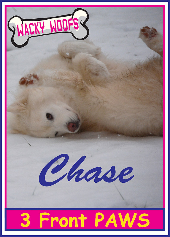 Chase 3 Front Paws