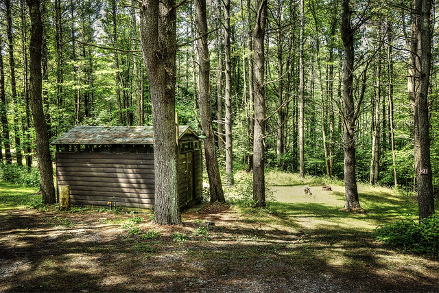 Privy in the woods
