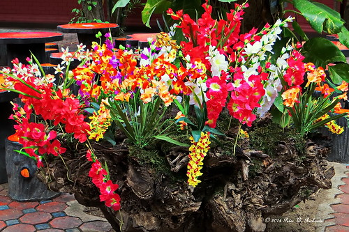 Orchids of Chiang Mai. | by ol'pete